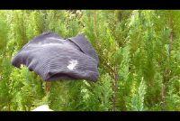 Verwijder boomsap uit de kleren - hoe het werkt