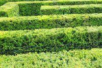 Mooie hagen - zodat u een decoratieve achterste boog creëren