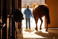 Aankomst van de nieuw paard in de stal - Nuttig
