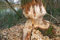 Minecraft: Mod Tree - dus profiteren ervan