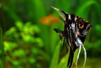 Mooie vis voor aquarium - zo beheert een kleurrijke verscheidenheid