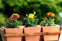 Voorjaar planten op het balkon - Ideeën en suggesties