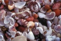 Maak sieraden zelf - hoe het werkt met mosselen