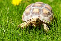 Mini Turtle buy - Feiten over de verzorging en onderhoud