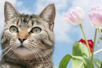 Katten en warmte - die wordt waargenomen