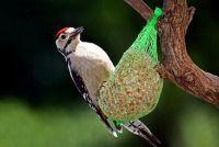 Feed verschillende soorten vogels in Duitsland in de winter goed