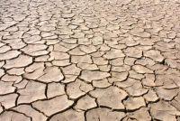 De voedselketen in de woestijn - een eenvoudige uitleg