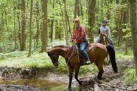 Maak vliegen betekent zelf - huis remedie voor remmen bij paarden
