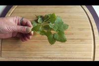 Harvest mint en maak duurzaam