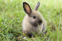 Tooth error - help het konijn met een speciaal dieet