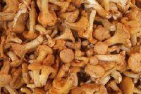Paddestoelen: cantharellen en wild - een grote soep recept