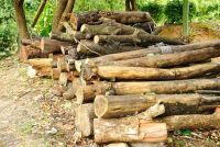 Logs kopen - Wat u zou moeten overwegen in hout voor een boomhut