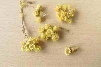 Helichrysum kopen gedroogde - hier vindt u de decoratie vinden