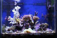 Marine Aquarium - de ontwikkeling en het onderhoud