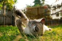 Katten en warmte - zodat u uw kat te helpen door de zomer