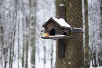Build vogelhuisje - hoe het werkt