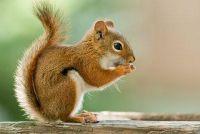Feeding eekhoorns - dus je het goed