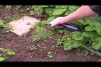Natuurlijke onkruidverdelgers - dus hulp huismiddeltjes wildgroei
