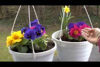Bloemen maart - de eerste bloemen in