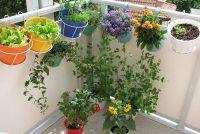 Irrigatiesystemen voor het balkon - opties