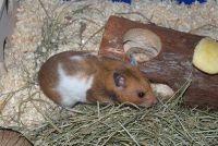 Hamster deal - dus het dier is nooit saai