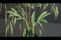 Bind weide grassen en bloemen op een boeket - hoe het werkt
