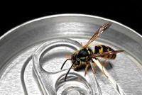 Wat te doen als een wespensteek zwelling?  - Fast Relief