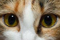 Als de kat Trant het oog - dat u moet zich bewust zijn