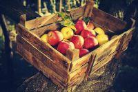 Oude houten kisten te verbeteren - de 5 beste ideeën