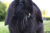 Hoe oud is een konijn?