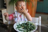 Spinazie warm giftig?  - Meer informatie over spinazie Ontdek