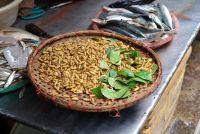 Solliciteer home remedies voor maden rechts