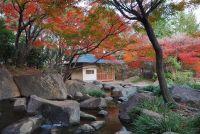 Welke boom heeft rode bladeren?  - Lees meer en verzorgingstips voor de Red Maple