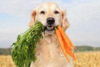 Wat kunnen honden eten?  Bereid hondenvoer zelf -