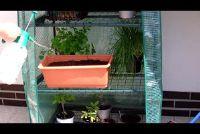 Plant radijs - dus slaagt's