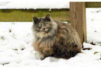 Cat wheezes vaak - wat te doen?