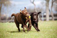Gevaarlijke Hond Toy - wat je moet niet beter kopen