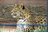 Programma: haarkleuring - zo succesvol een flitsende groen luipaard print