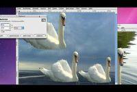 Fotomontage selbermachen gratis - dus we gaan met GIMP