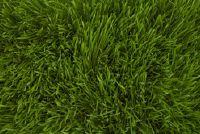 Grass mijt uitslag - Mededelingen