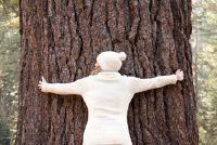 Levenscyclus van een boom - Overzicht