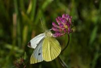 Maak een vlinder weide - het moet je betalen