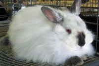 Build behuizing zelf - dus je konijn zich comfortabel voelen