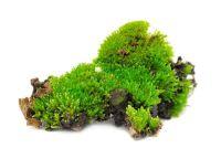 Het nemen van een krans met mos duurzaam - hoe het werkt