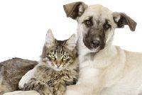 Waarom eten honden kat uitwerpselen?  - Notities