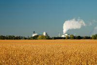 Gebruik maïs als een vaste brandstof - hoe het werkt met pellets