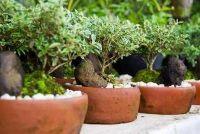 Bloempotten voor buiten - zodat uw planten krijgen hun beste voordeel
