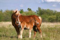Koop paardenmelk - Informatie over het product