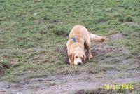 Hond eet de aarde - je kunt doen
