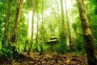 Dieren en planten in het tropisch regenwoud - Overzicht